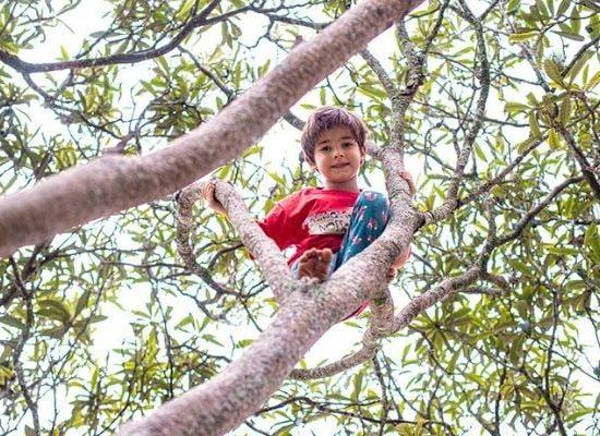 Menino na árvore